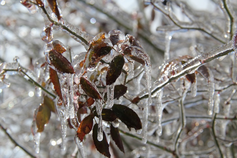 Snow 2015 images 029